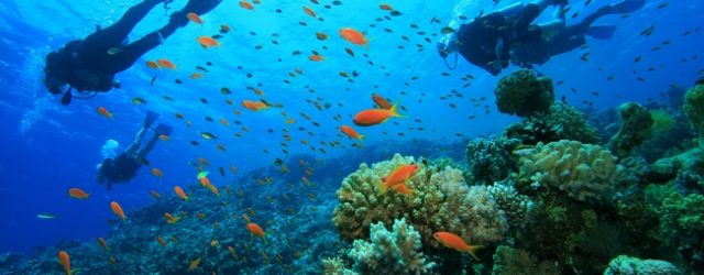 Scuba Diving in Goa: Why You'll Love It!